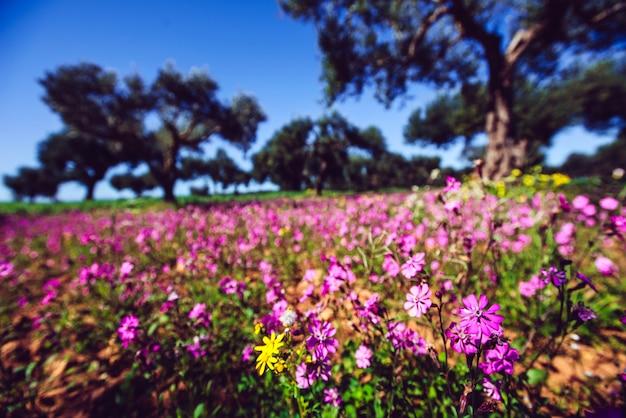 青い空と庭の素晴らしい景色。地中海のクリマ