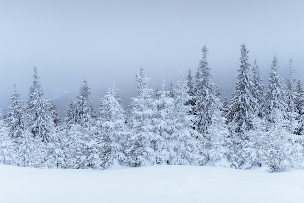 Fantastic winter landscape. on the eve of the holiday. the dramatic scene. carpathian, ukraine, europe. happy new year