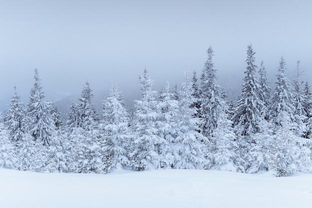 Фантастический зимний пейзаж. накануне праздника. драматическая сцена. карпаты, украина, европа. с новым годом