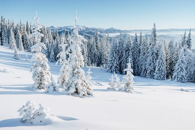 Фантастический зимний пейзаж. заснеженные елки в альпийских горах