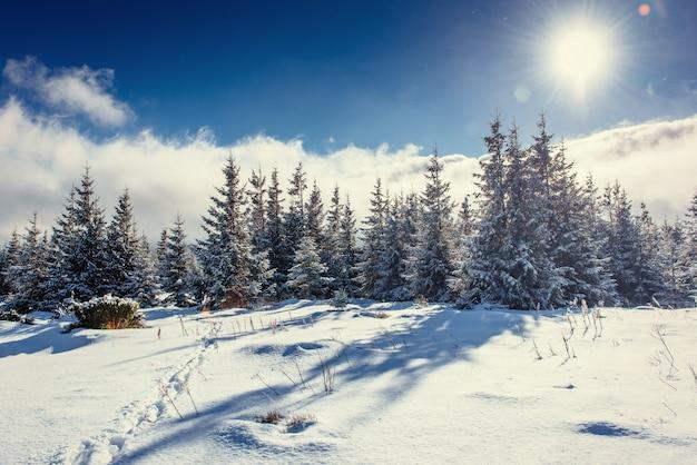 Fantastic winter landscape and trodden trails that lead