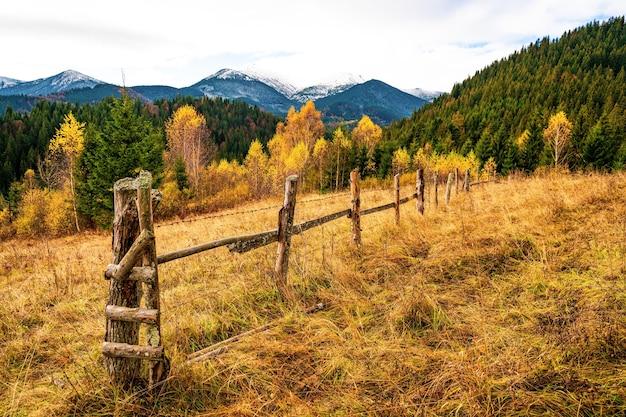 우크라이나의 특이한 자연의 멋진 따뜻한 가을에 환상적으로 아름다운 다채로운 카르파티아 숲