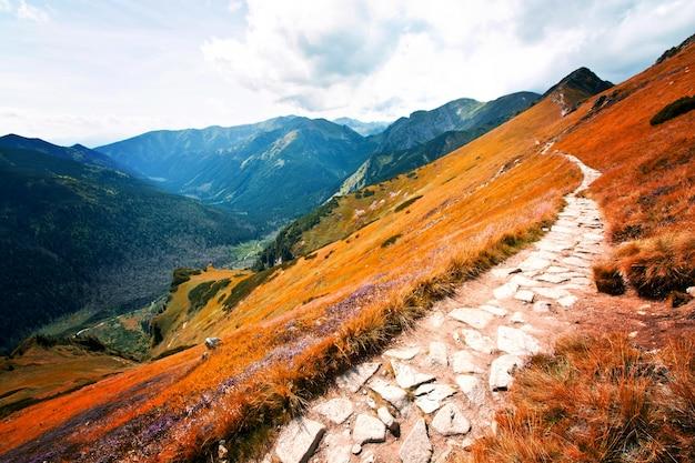Fantasy and colorfull nature landscape. carpathia.