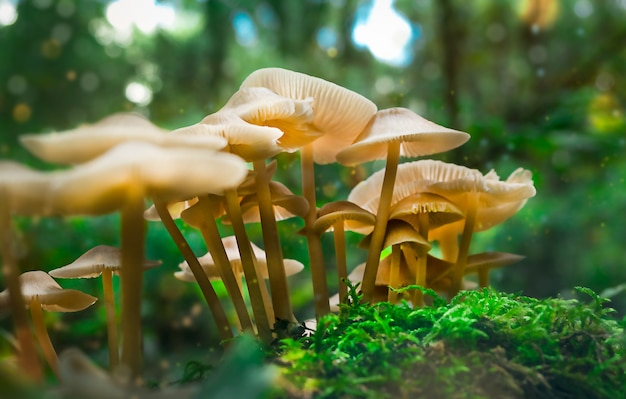 Fantasy magical group of glowing mushrooms in green forest.