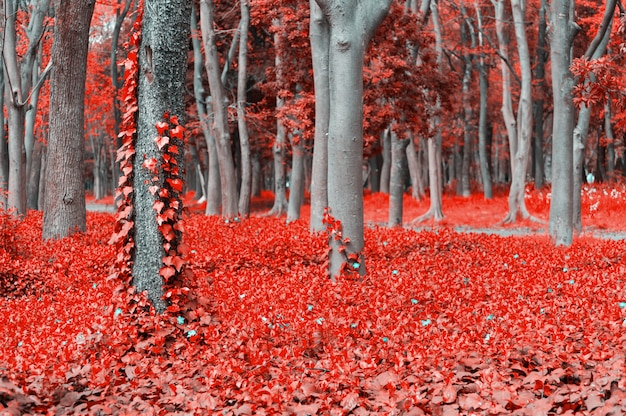 Fantasy scene of red forest with trees and ivy