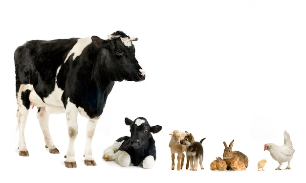 Farm animals in front of a white background