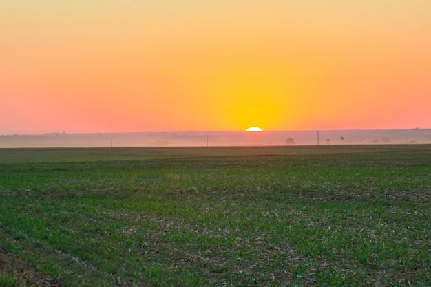 Кофейная плантация фермы в солнечный день на закате