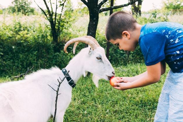 염소 먹이 소년과 농장 개념