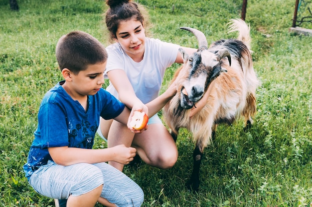 Farm concept with kids and goat