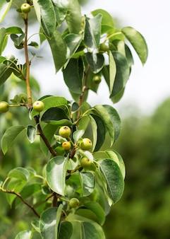 Concetto di fattoria con pianta biologica