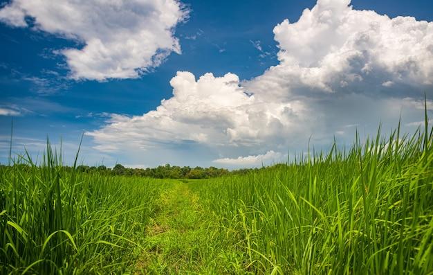 Страна фермы и облако в пейзаже голубого неба с освещением солнца.