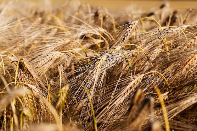 Зерновые фермы