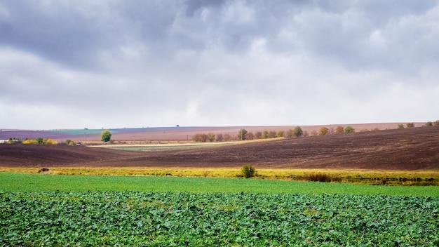秋には緑豊かな農地。
