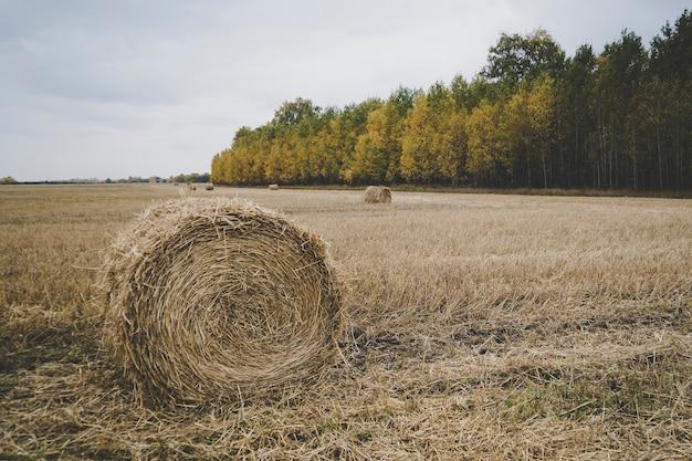 Поле фермы с тюками сена. осенний урожай. скошенная солома на фоне леса с разноцветными деревьями. красивый осенний пейзаж.