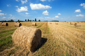 Farm field with hay balls