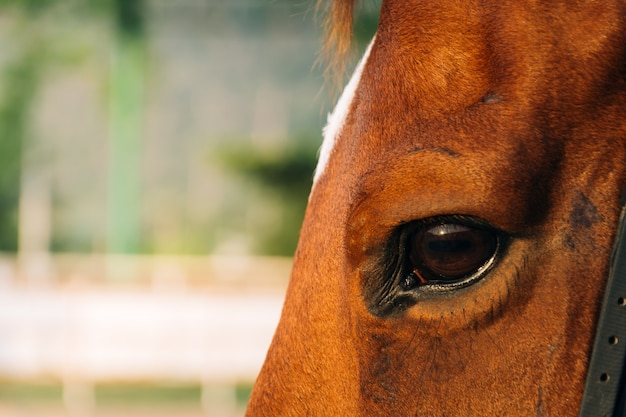 Farm gelding eyelashes domestic mammal