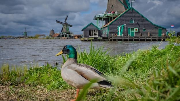 Farm lake windmill