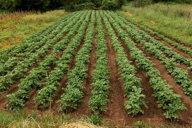 Фермерская жизнь с растениями под большим углом