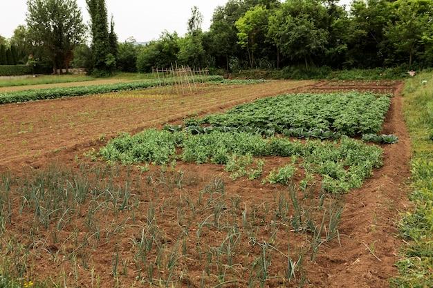 Фермерская жизнь с овощами под большим углом