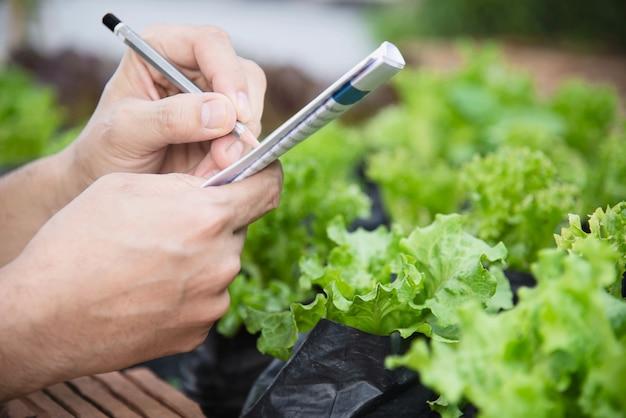 Человек фермы работает в своем саду органических салата