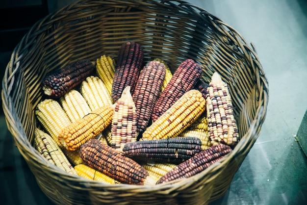 農場-ラテンアメリカのマルチカラーハーベストコーン