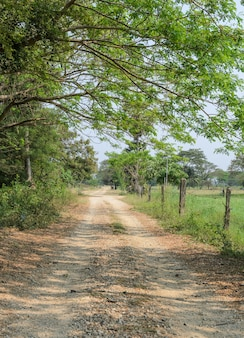 Farm road in the countryside