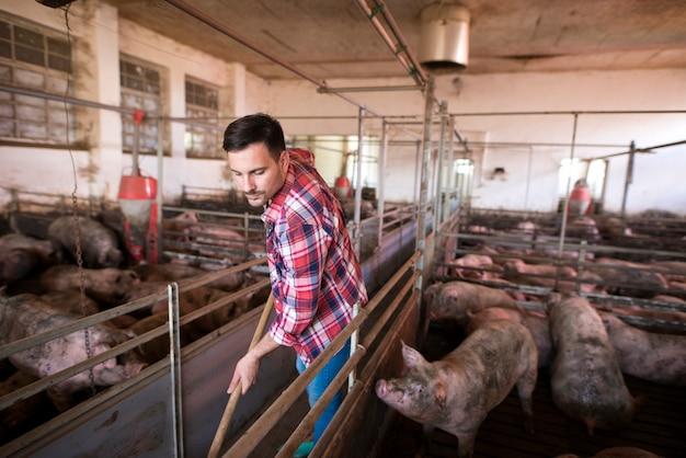 Работник фермы чистит и поддерживает свинарник и свиней в чистоте