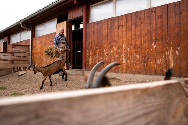 Farm worker feeding goat domestic animals at the farm.