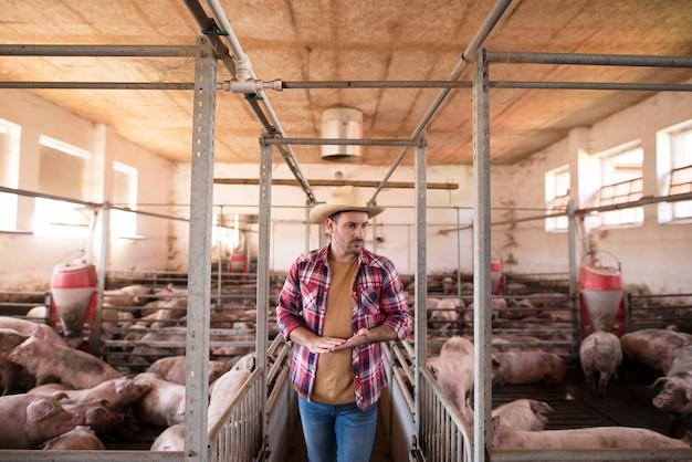 Работник фермы идет мимо клеток для свиней