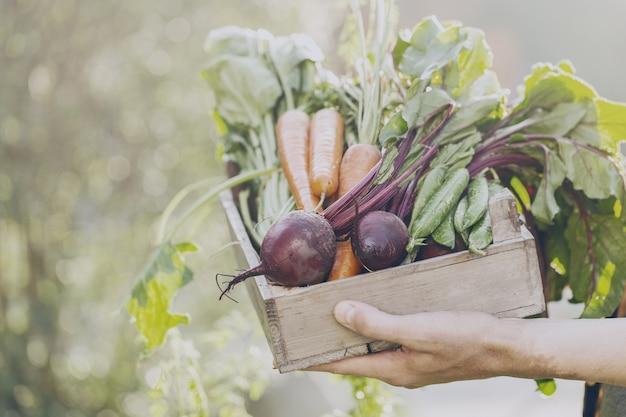 이른 아침 정원에서 나무 상자에 신선한 맛있는 야채를 들고 농부 성인 남자