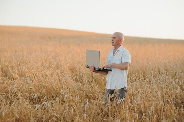 Фермер-агроном на пшеничном поле проверяет урожай перед сбором урожая