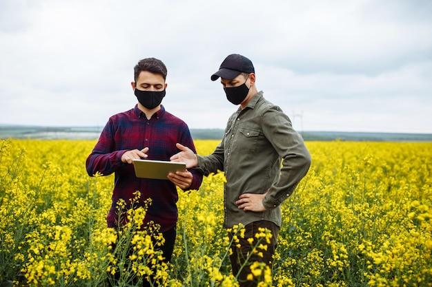 フェイスマスクの農学者と農学者は、タブレットを使用して開花菜種畑を調べます