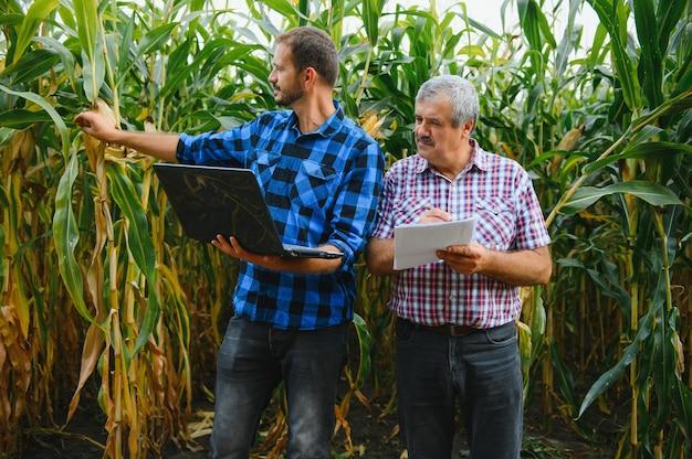 Фермер и агроном, работающие в поле, осматривают созревающие початки кукурузы. два бизнесмен проверяет созревание кукурузных початков. концепция аграрного бизнеса. я работаю бизнесменом в сельском хозяйстве