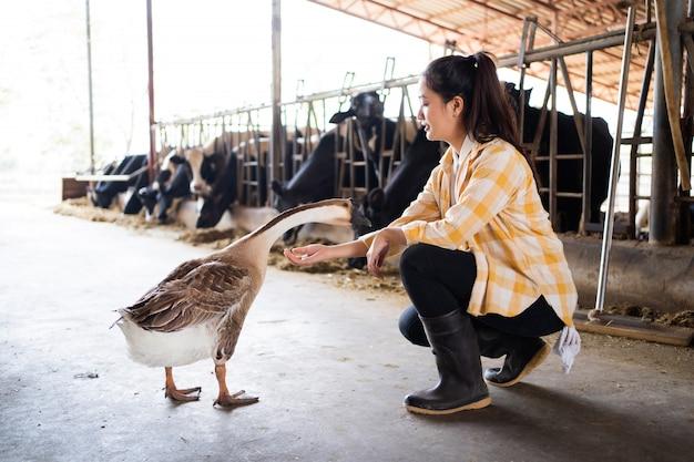 彼女はガチョウに話している農家のアジアのビジネスオーナー