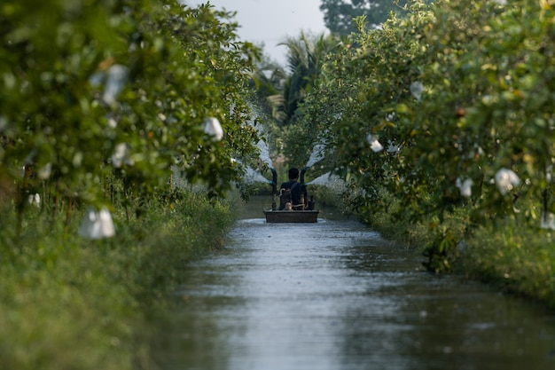 Farmer on boat with irrigation machine waters of farmland in guava garden