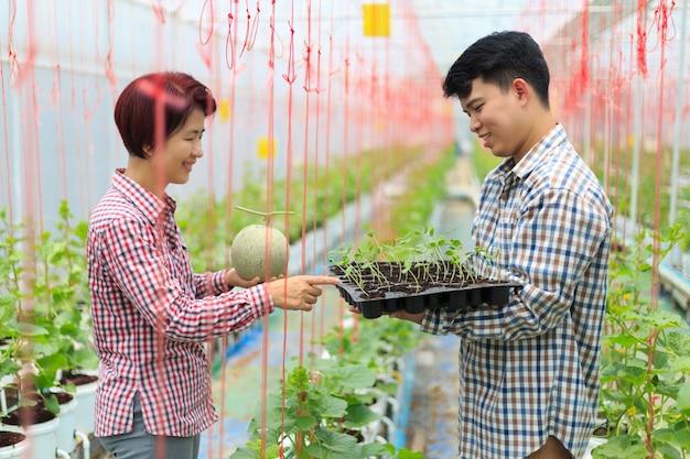 農家は温室でメロン苗トレイを運ぶ