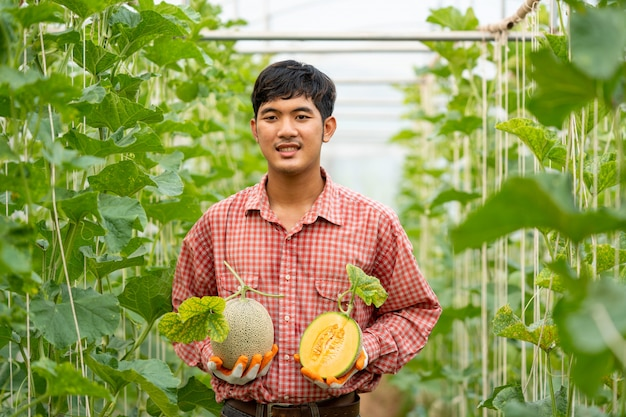農家は、温室、カンタルーペ、新鮮なメロンの木で手でメロンの品質をチェックします。