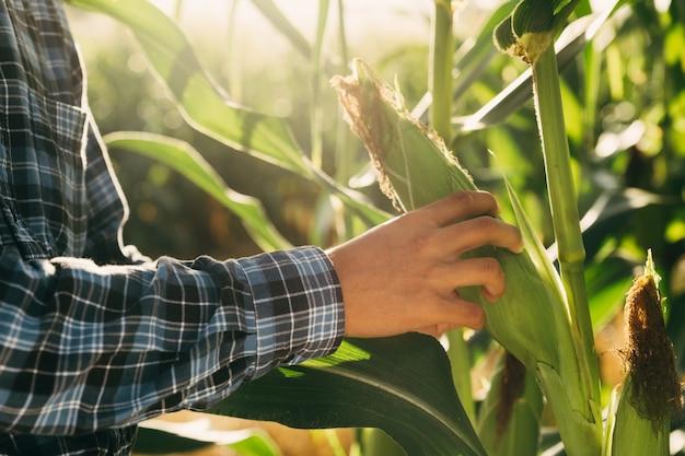 農民は、作物、金融、農業の概念の前に、農場でトウモロコシをチェックしています。