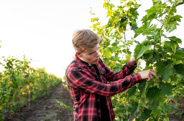 The farmer checks the vineyards for disease