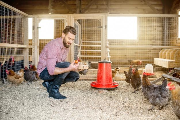 鶏と一緒に木造の鶏舎で卵を集める農家