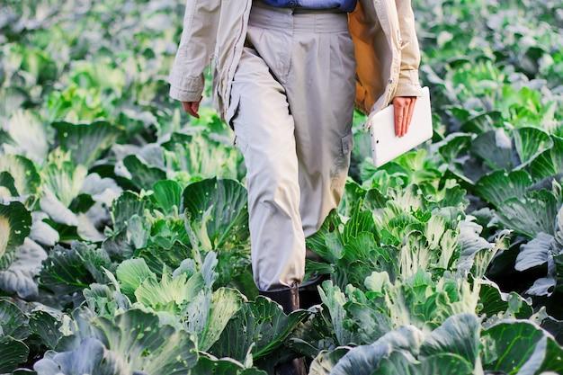 農家は収穫前にキャベツの品質を管理しています。農業分野でデジタルタブレットと最新技術を使用する女性農学者