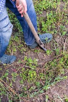 農夫は若い黄色いジャガイモを掘ります