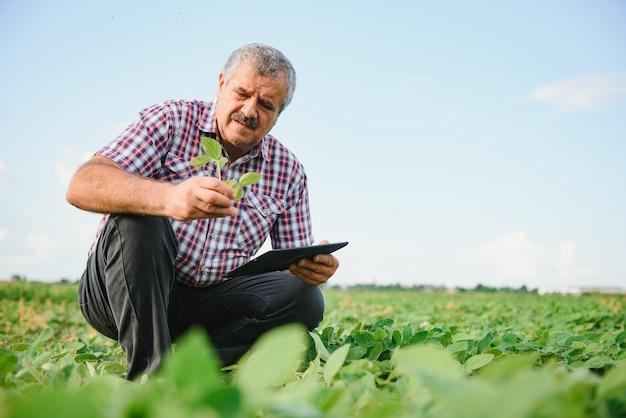 Фермер изучает зеленые соевые бобы в поле