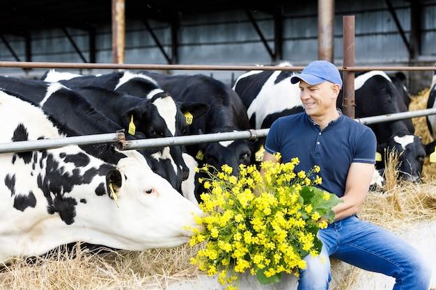 Фермер кормит коров свежей травой