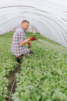 温室に座ってキャベツの苗に水をまく農家