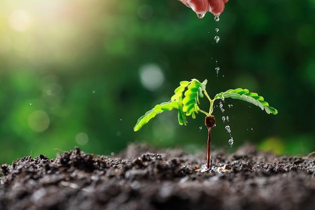 어린 아기 식물을 급수하는 농부 손