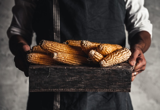 Farmer handles fresh corn in a wooden box