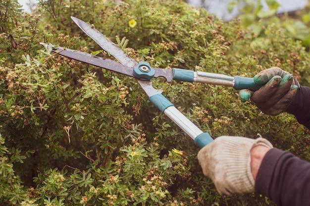 큰 정원 가위로 덤불 가지 치기를 만드는 농부의 손 원예 도구 농사 시즌