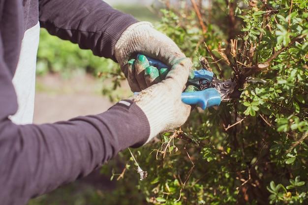 큰 정원 가위로 덤불 가지 치기를 만드는 농부의 손 원예 도구