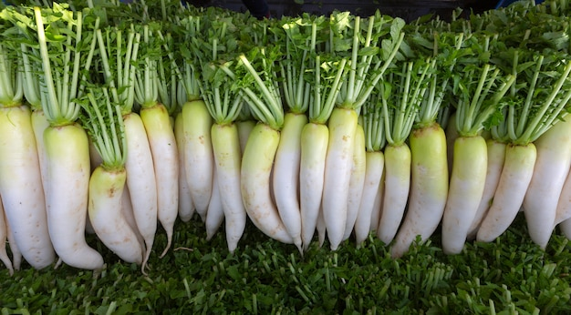 Farmer harvest and cleaning daikon (japanese radishes) in the farmland for export to market.